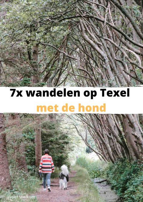 7x wandelen op Texel met de hond - Woef Welkom