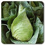 Organic Caraflex F1 Hybrid Cabbage