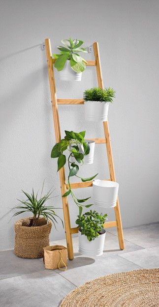 Cheap House Plants