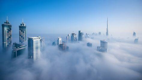 Cloud 9 Pet Hotel Abu Dhabi - The O Guide