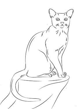 Ausmalbild Katze Auf Dem Tisch Zum Ausmalen Ausmalbilder