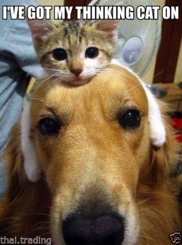Funny Cat Cute Kitten With Dog Animal Photo Fridge Magnet 2 X 3