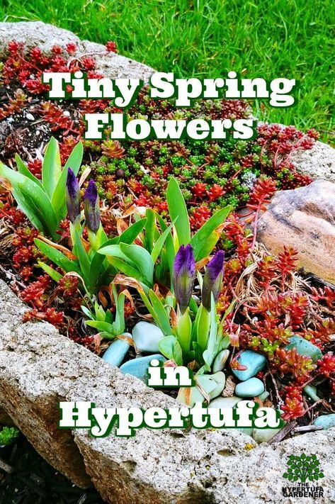 Time To Think About Tiny Spring Bulbs Planting Bulbs Succulent