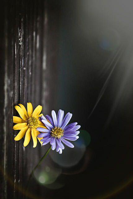 حكم حلق شعر الجسم Beautiful Flowers Wallpapers Flower Pictures Flowers Photography