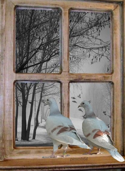 Pin By Lolo Martini On خلفيات Pigeon Bird Pigeon Bird