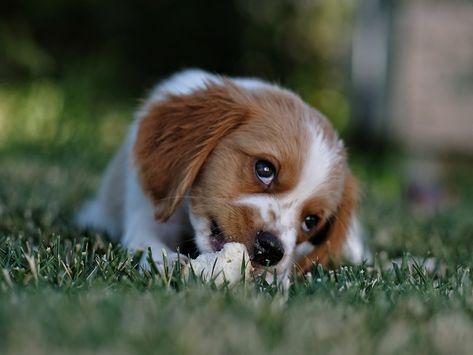 #puppy #puppylove #puppylife #puppygram #puppiesofinstagram #puppyoftheday #puppylove🐶 #puppylover #puppydog #puppyface #puppyeyes #puppyfun #puppy❤️ #puppymodel #dog #dogsofinstagram #doglovers #dogoftheday #dogstagram #dogsofinsta #doggo #doglove