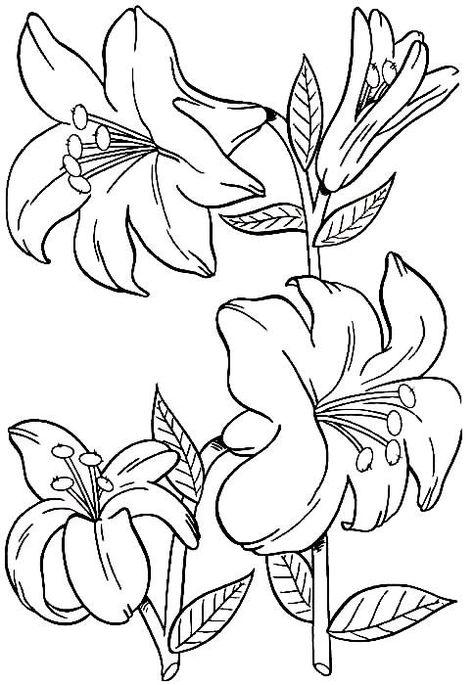 Desenho Flores Bonitas Colorir Desenhos Flower Drawing