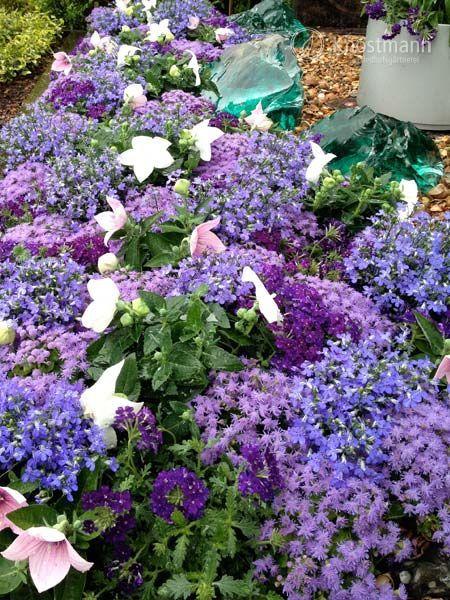 11 Sommer Bepflanzung Ideen Bepflanzung Grabbepflanzung