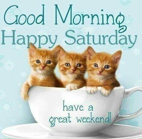 3 Kitty Good Morning Happy Saturday Image Morning Kitten Good Morning Saturday Good Mornin Good Morning Happy Saturday Happy Saturday Images Cute Good Morning