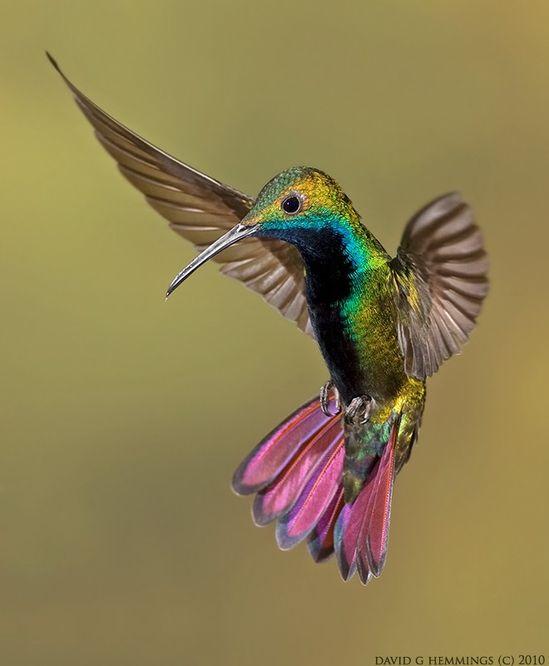 Colorful Hummingbird, by David G Hemmings