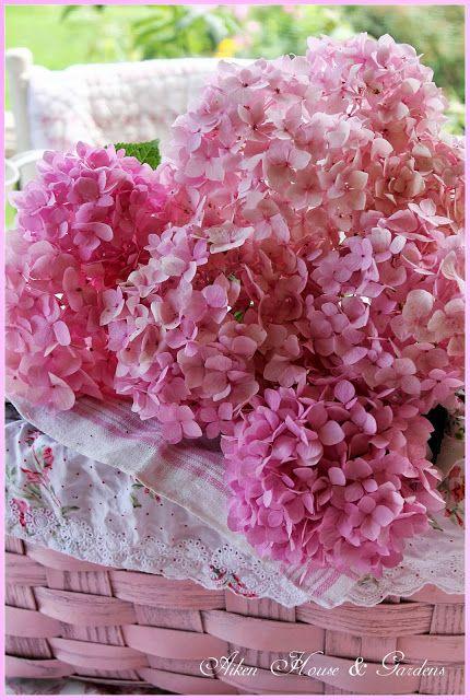 Delicate Pink #hydrangea in a basket