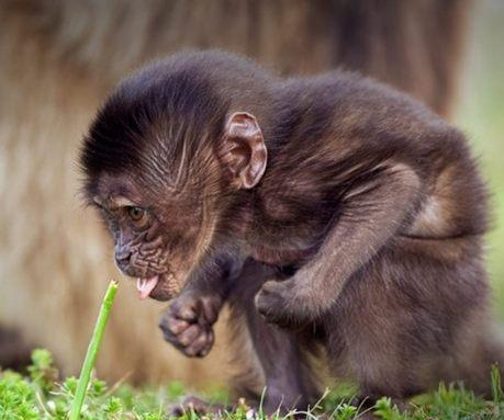Baby Monkey @Debra Eskinazi Stockdale Eskinazi Stockdale Burton