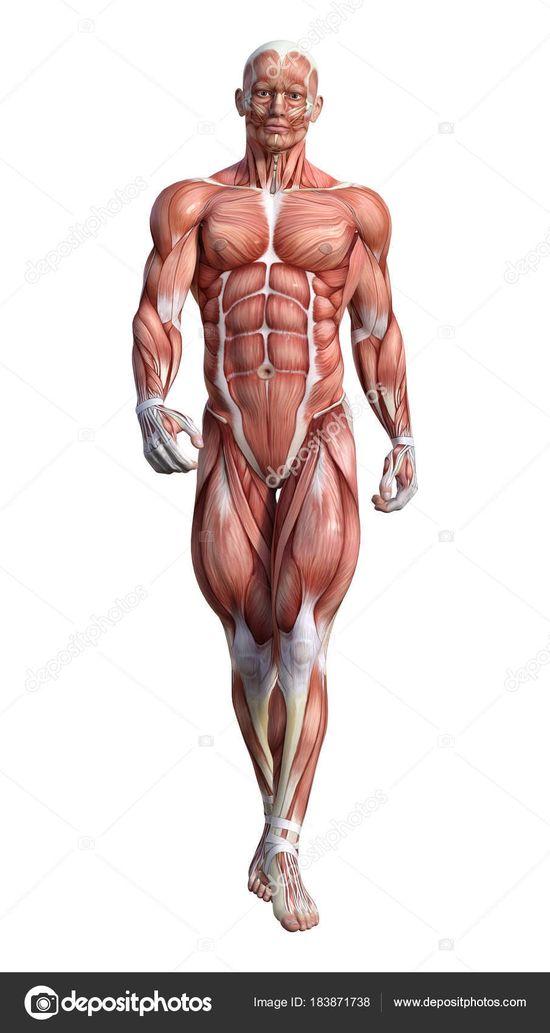 anatomía  Board