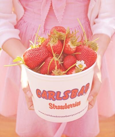 carlsbad strawberries!