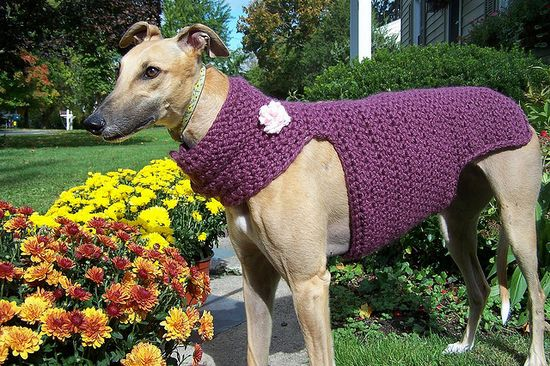 crochet and pets