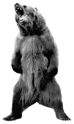angry bear - Google Search