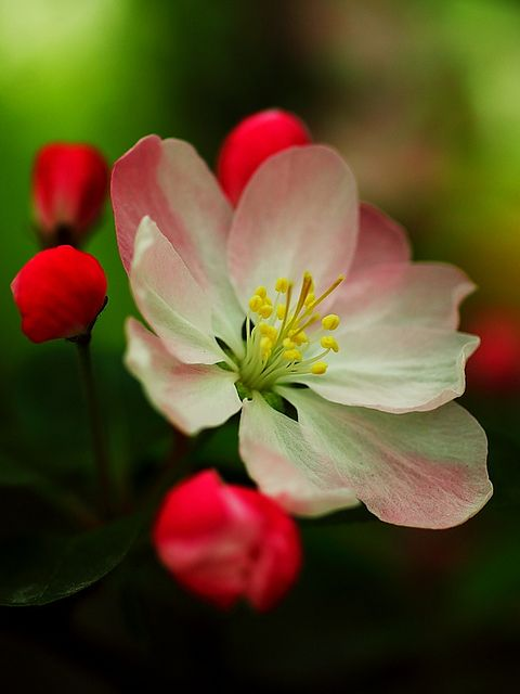 ...delicate bloom
