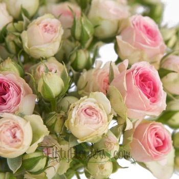 Pink n Green Eden Spray Garden Roses