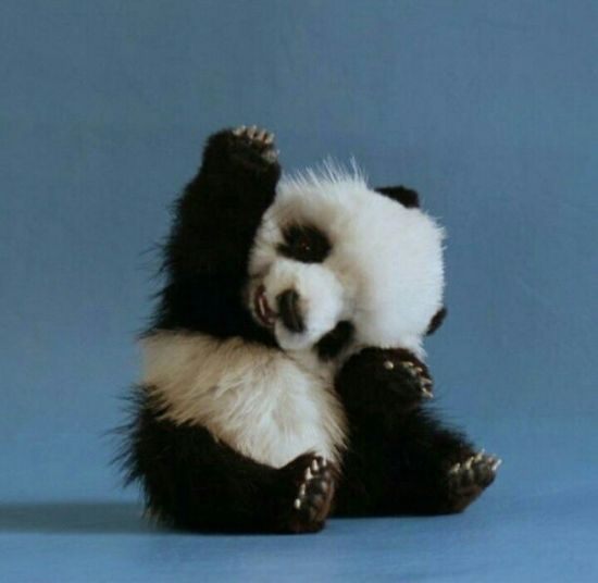 Well hello to you too baby Panda!