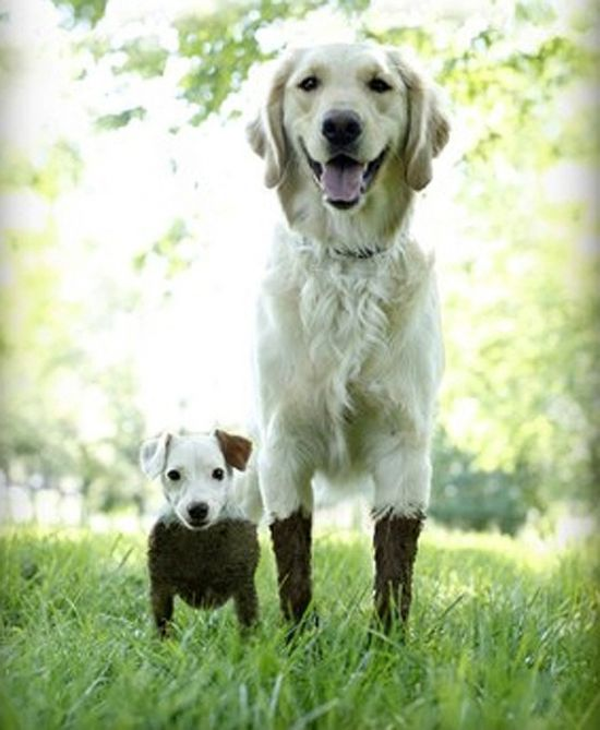 2 dogs in the mud.