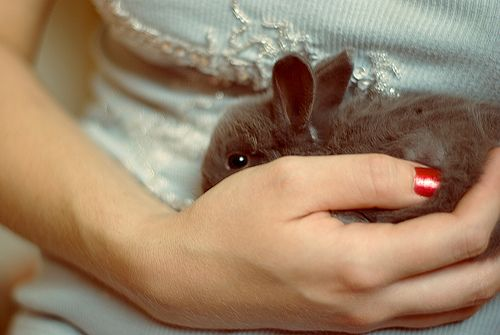 bunny..