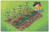 Enter your zip code and this calendar will tell you what to plant and when to pl