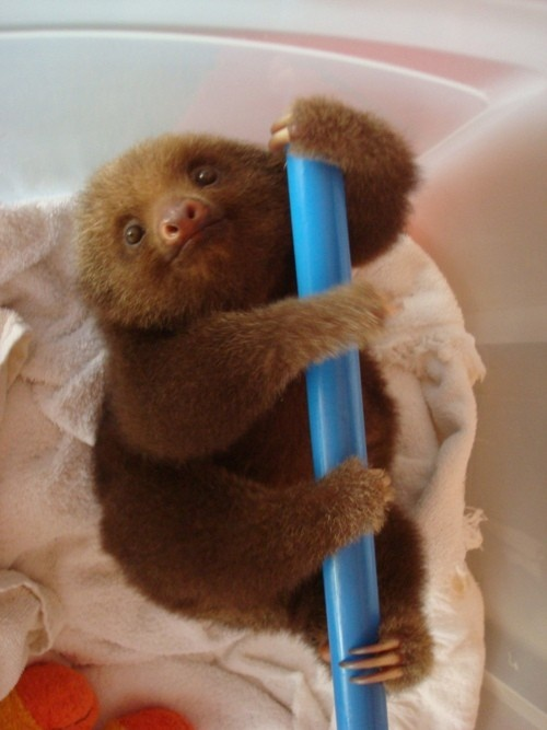 I love you baby sloth!