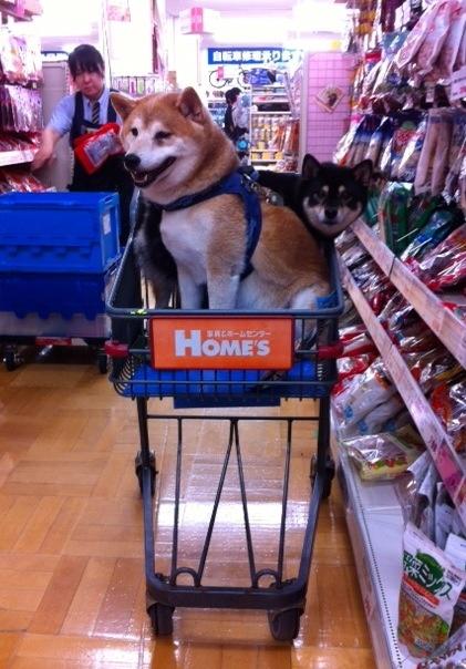 pet store party