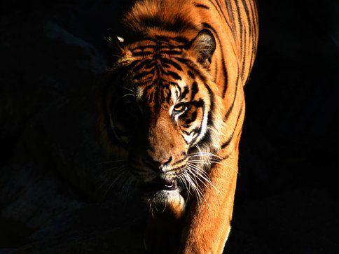 Port Lympne Wild Animal Park — Halloween Safari