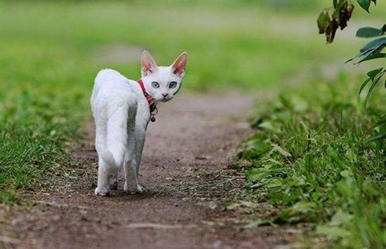 Stunning Baby Animals Photography Inspiration