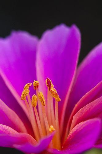 ~~ Flower ~~