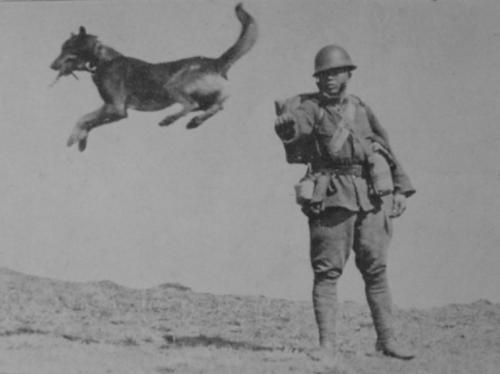 Japanese soldier giving commands to war dog