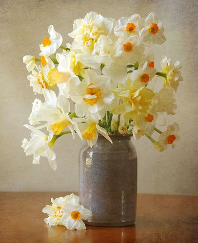 tiny white daisies - easter - daffodils