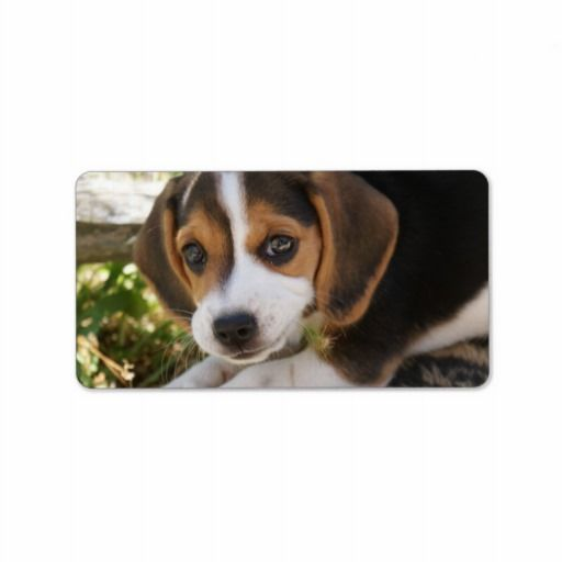 Beagle Baby Dog Labels