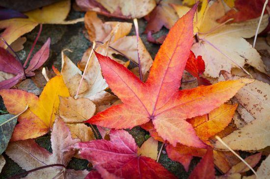 Good Garten Herbst im Pavillon