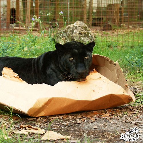 If you have cats you'll see the humor in this! -wild cats with boxes- imgur.com/...