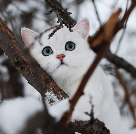 look at this kitteh!