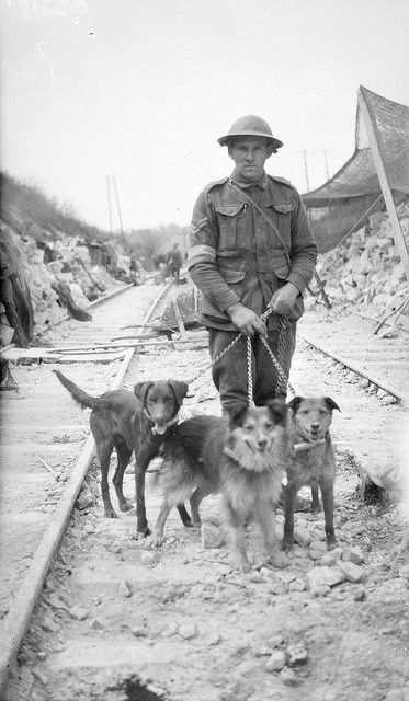 """""""A British soldier holds three dogs which were trained to carry messages between the lines and command during World War I. Usually the dogs had been strays, so one particular breed of dog could be not preferred. Generally, however, traditional working breeds, such as collies, retrievers, or large terriers, were chosen for messenger work. Messenger dogs were based in sectional kennels near the front lines. On average each sectional kennel had 48 dogs and 16 handlers."""