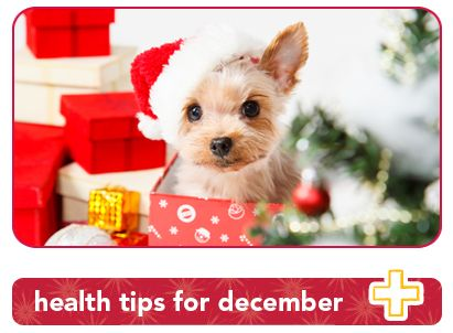 3 pet health tips to protect your pets in December