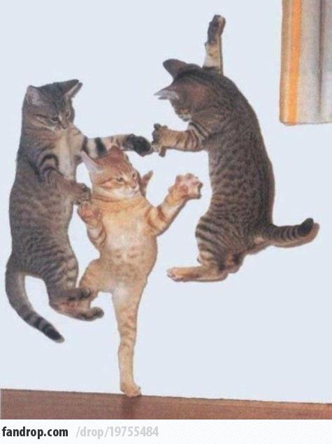 cat karate! #cat #funny