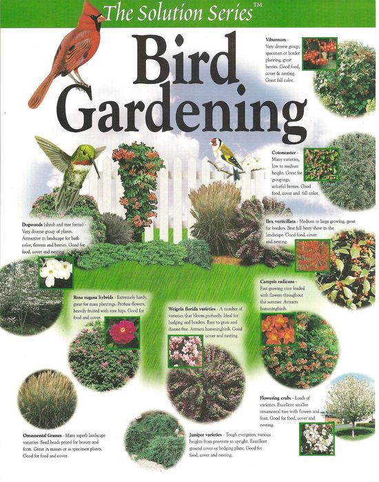 Bird Gardening Plant Plan;  Create your own habitat garden with these Flowering suggestions