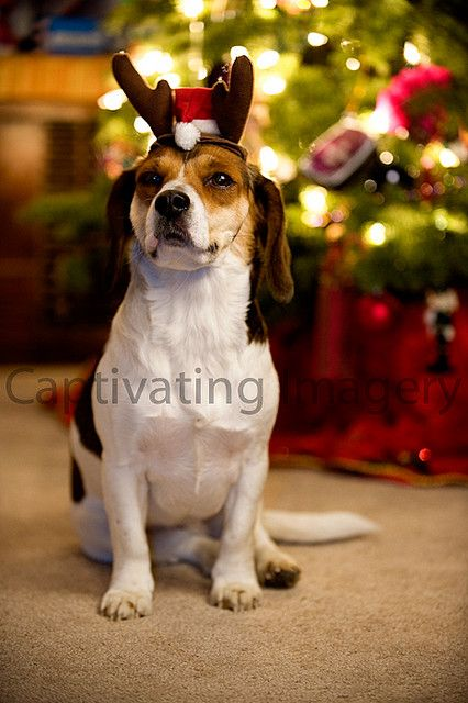 cute pet holiday portrait - this makes me smile :)