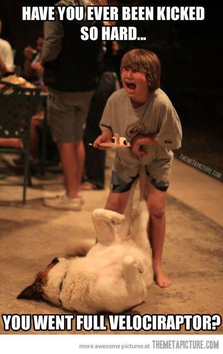 Can't stop laughing at this! HAHA #wild animal photos #funny ass photos #funny photos