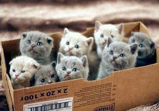 Kittens in a box awwwww