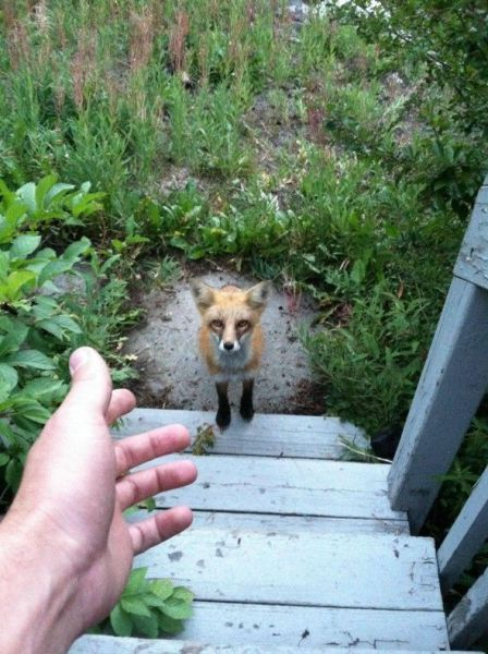 Backyard visitor....!  Watch funny animal videos and pictures at