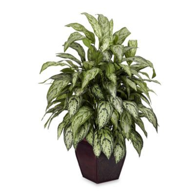 Nearly Natural Silk Silver Queen Plant w/Decorative Planter - BedBathandBeyond.com