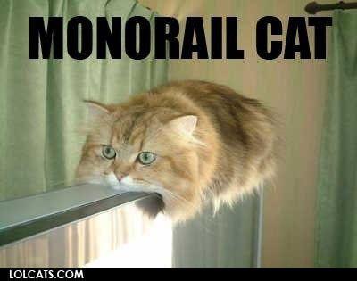 LOL Cats  :)