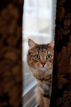 Big-eyed cat