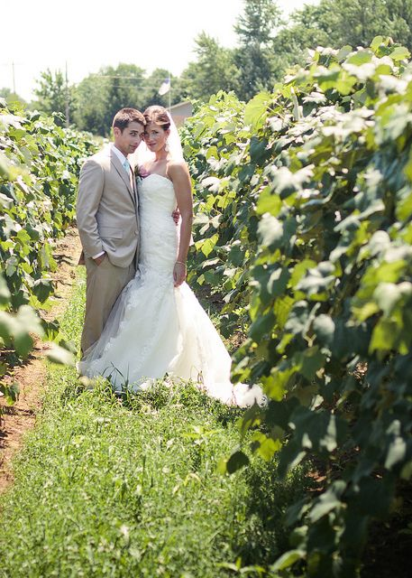 Wedding photo—Southwest Michigan vineyard