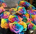 100 Seeds Rare Rainbow Rose Seed For Your Lover Rainbow Rose Flower Seed